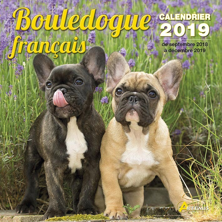 BOULEDOGUE FRANCAIS (2019)