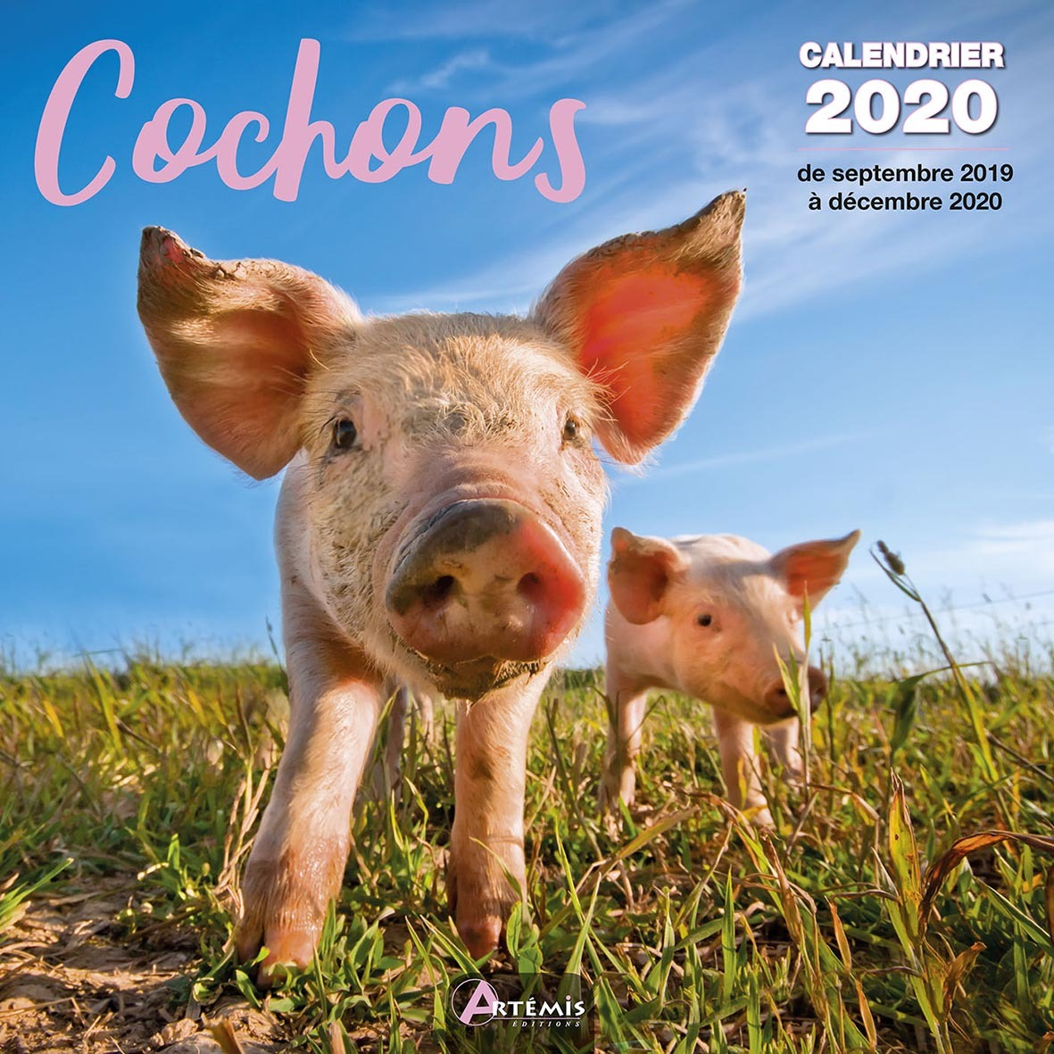 CALENDRIER COCHONS (2020)