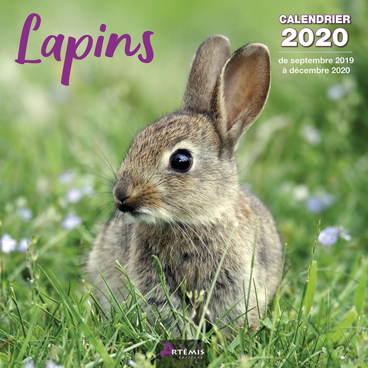 CALENDRIER LAPINS 2020