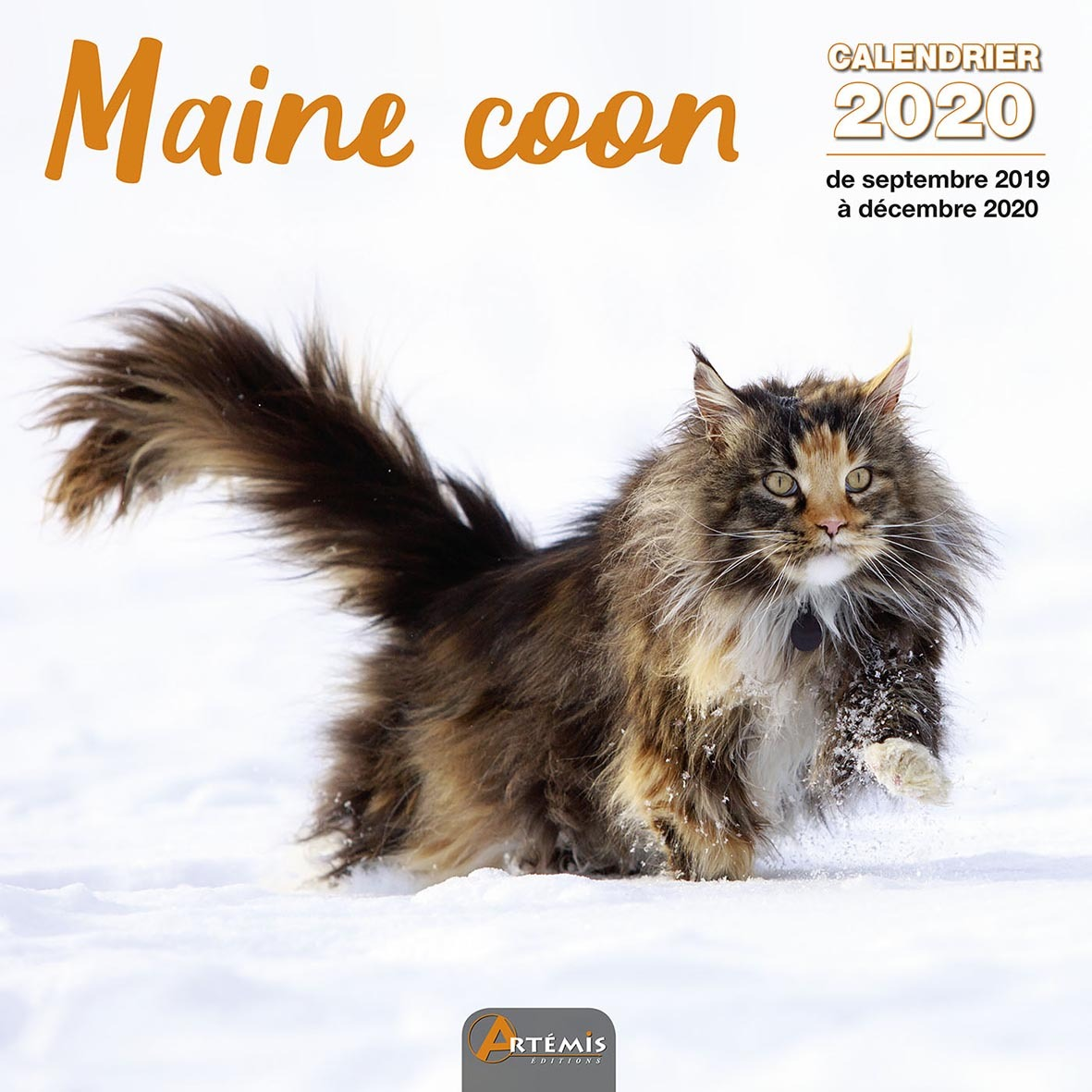 CALENDRIER MAINE COON 2020