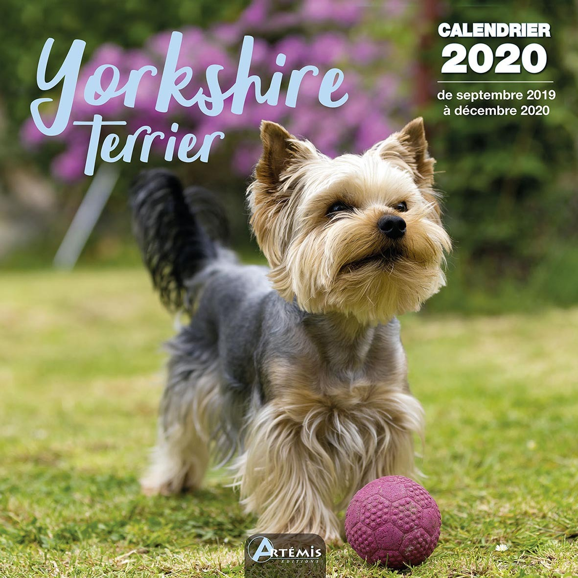 CALENDRIER YORKSHIRE TERRIER (2020)