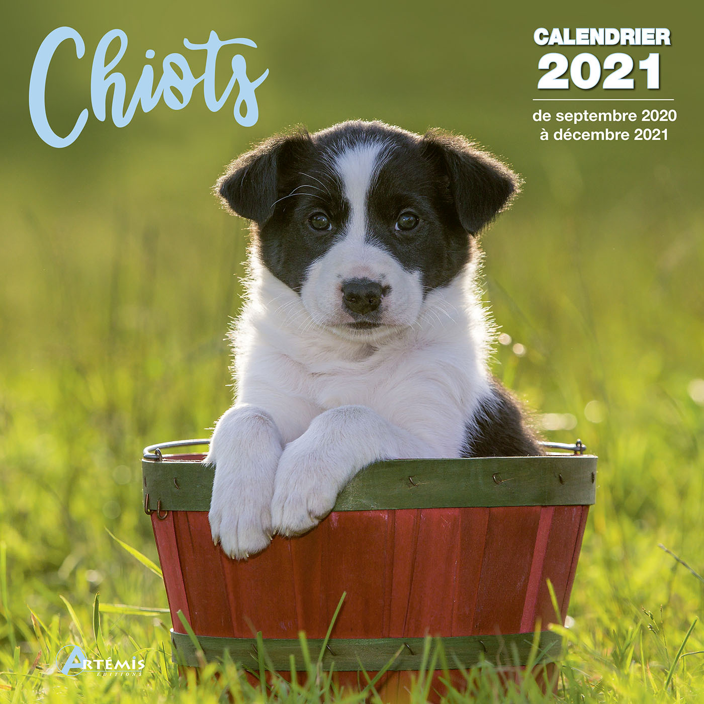 CALENDRIER CHIOTS 2021