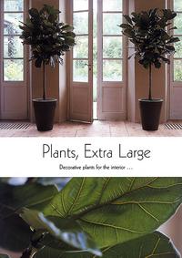 PLANTES EXTRA-LARGES POUR LA DECORATION D'INTERIEUR