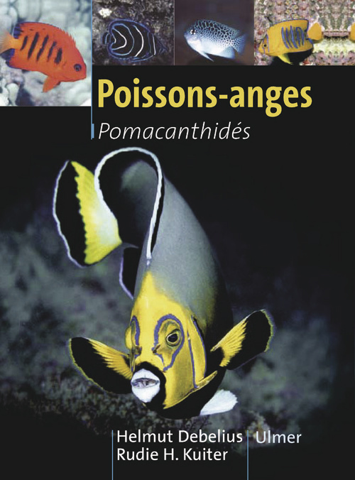POISSONS-ANGES