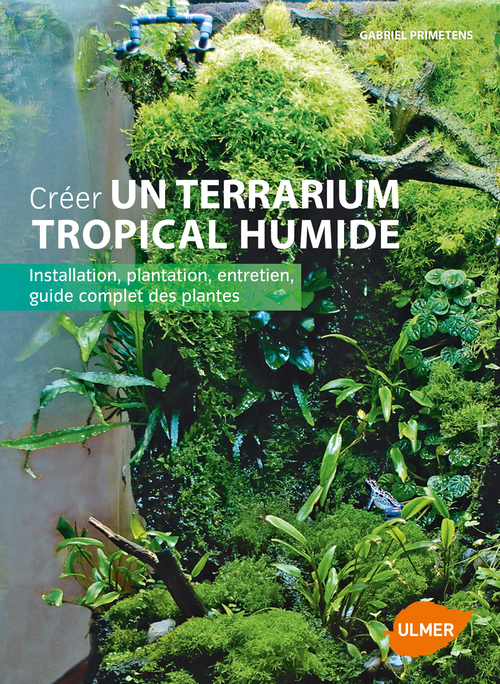 CREER UN TERRARIUM TROPICAL HUMIDE