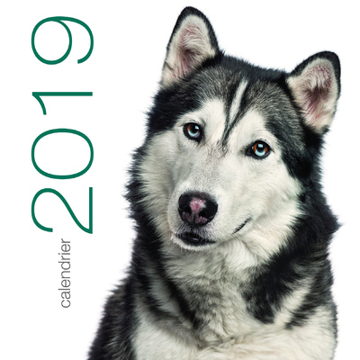 CALENDRIER MURAL 2019 CHIENS