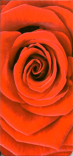 MARQUE PAGE ROSE ZOOM
