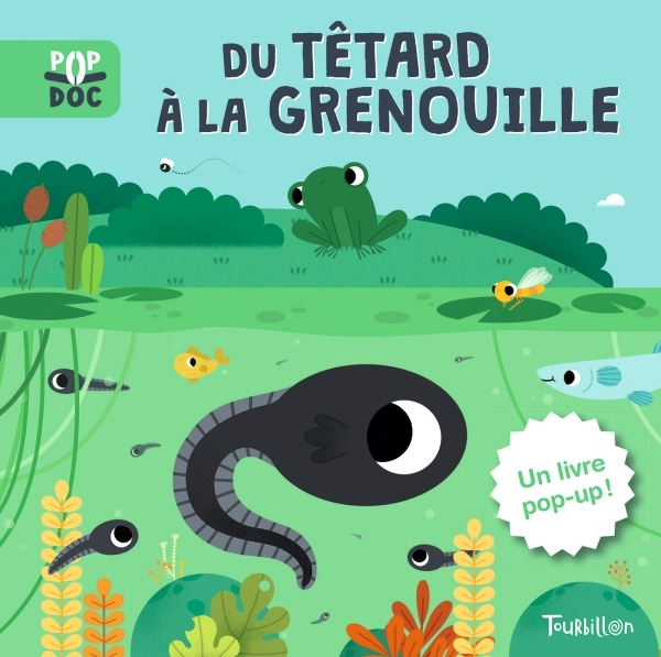 DU TETARD A LA GRENOUILLE - POP UP