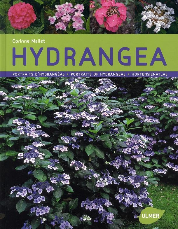 HYDRANGEAS - PORTRAITS